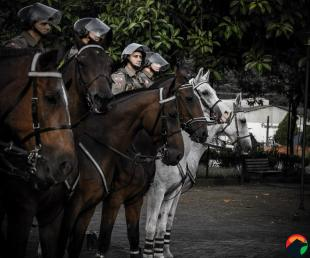 cavalaria joinva